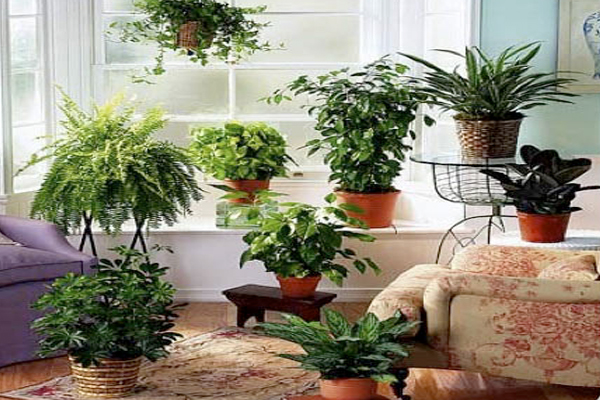 Bring liveliness to your homes with these house plants